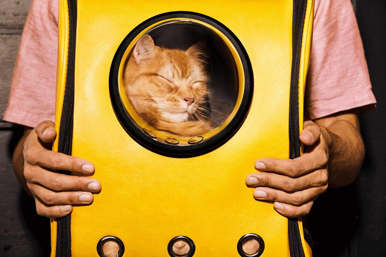 WEB 21 06 2089 26 B HAPPY ANXIETY CAT 01 165