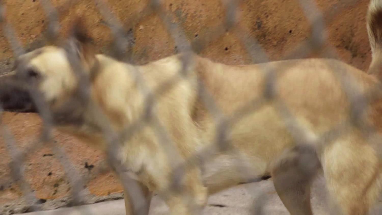 Wunderman Thompson Sao Paulo WORK Gud Rescue Dogz videocase