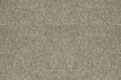 Shaw Floor Simply Stated Carpeting