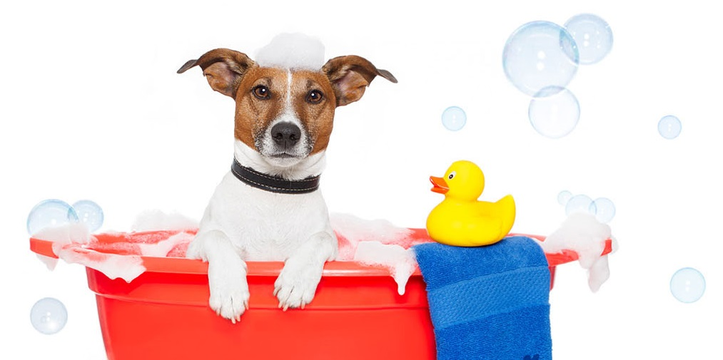 dog-bubble-bath