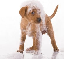dog-grooming-bathing-service
