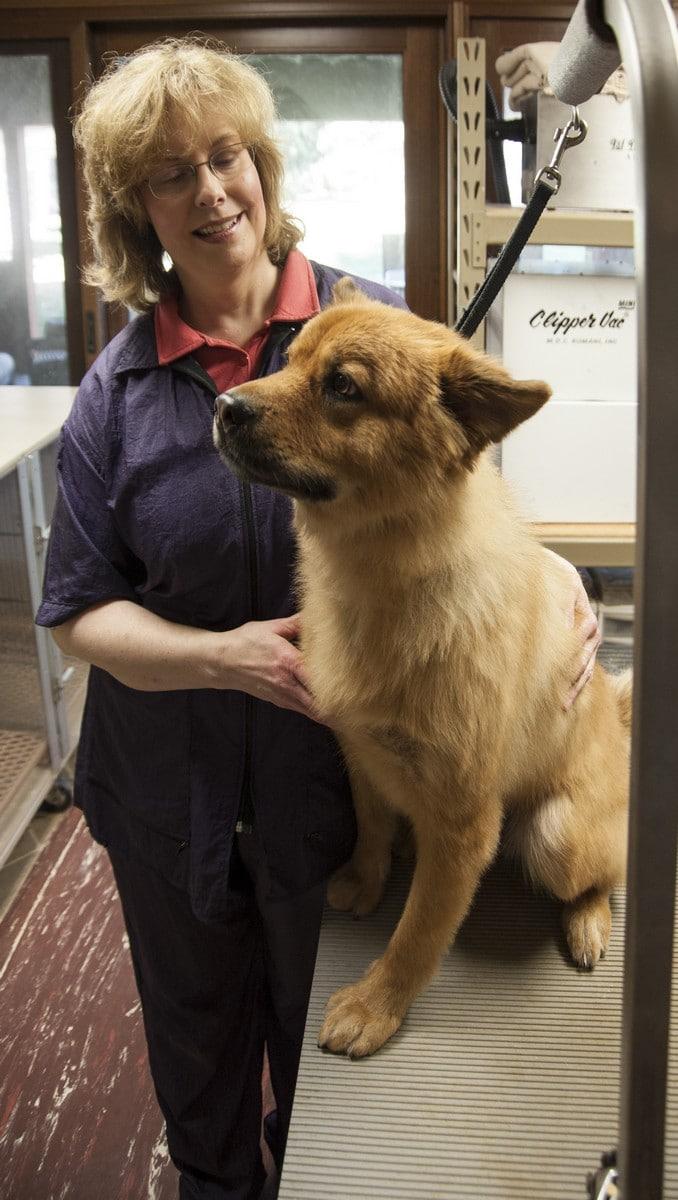 doublej-dog-grooming-006