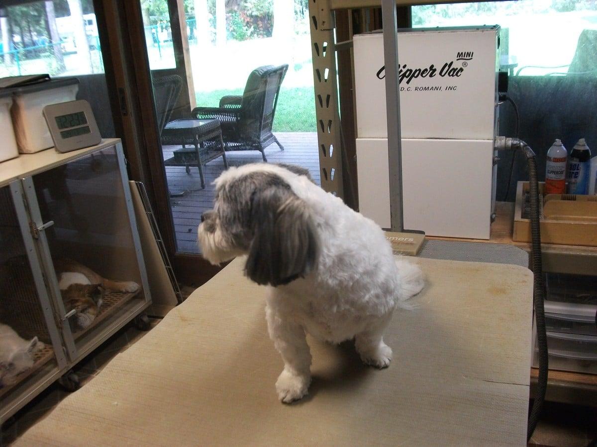 doublej-dog-grooming-015