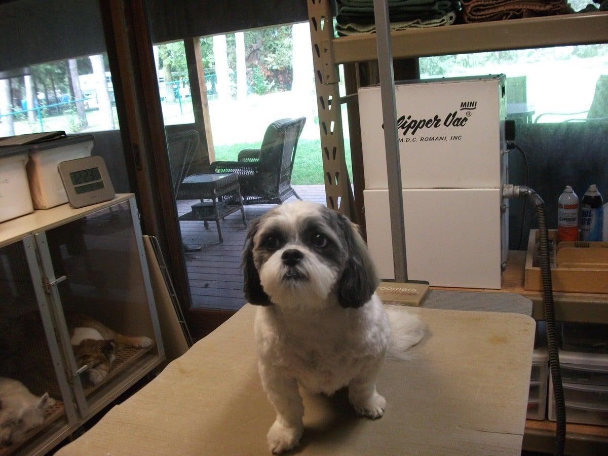 doublej-dog-grooming-016