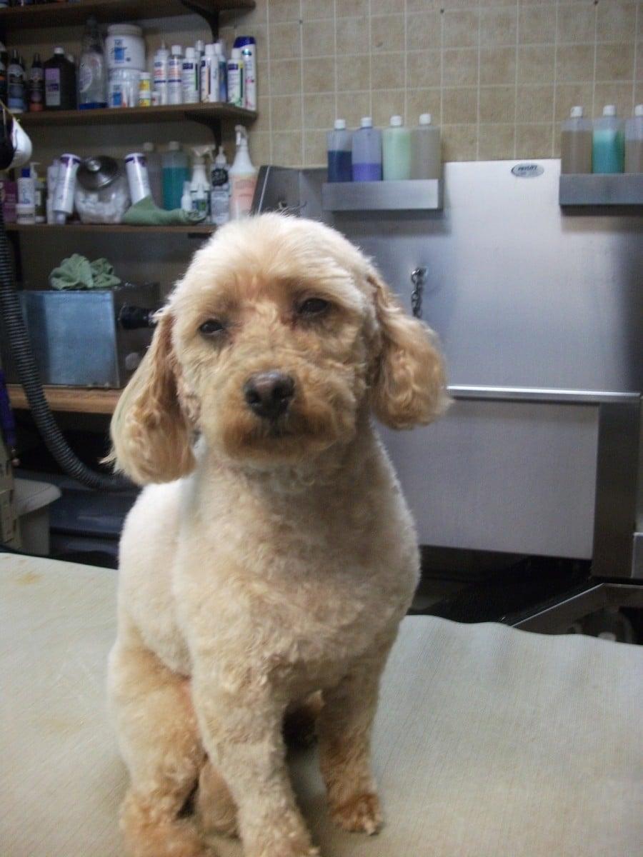 doublej-dog-grooming-017