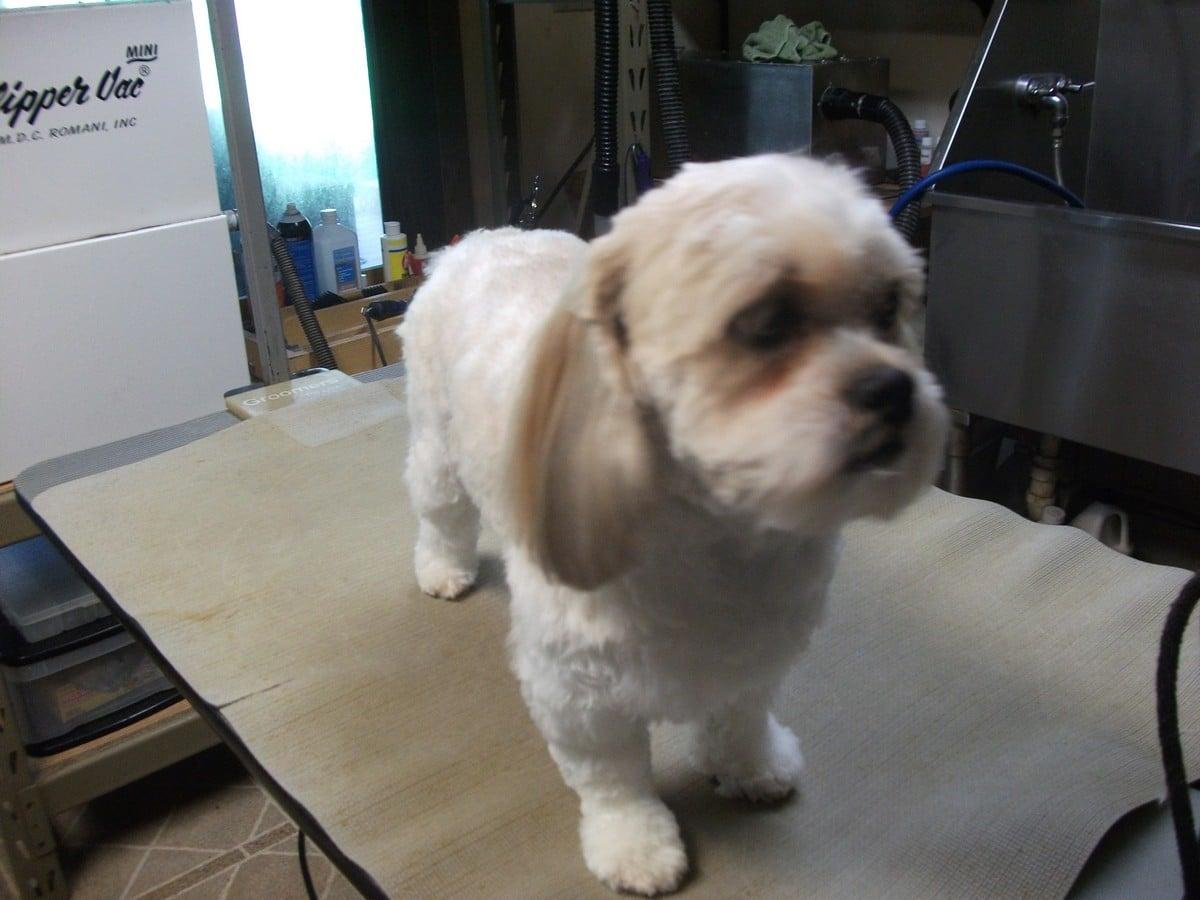 doublej-dog-grooming-018