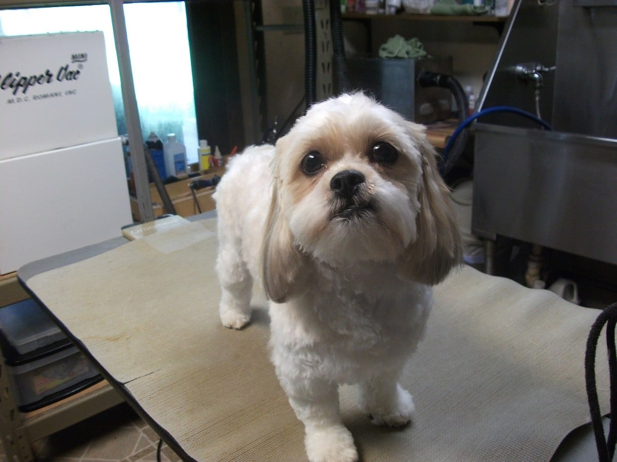 doublej-dog-grooming-019