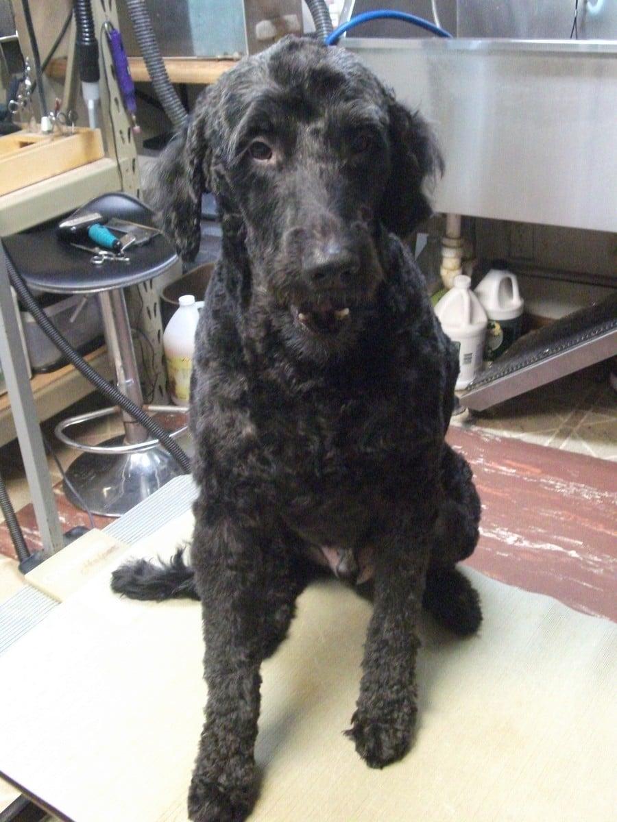doublej-dog-grooming-020