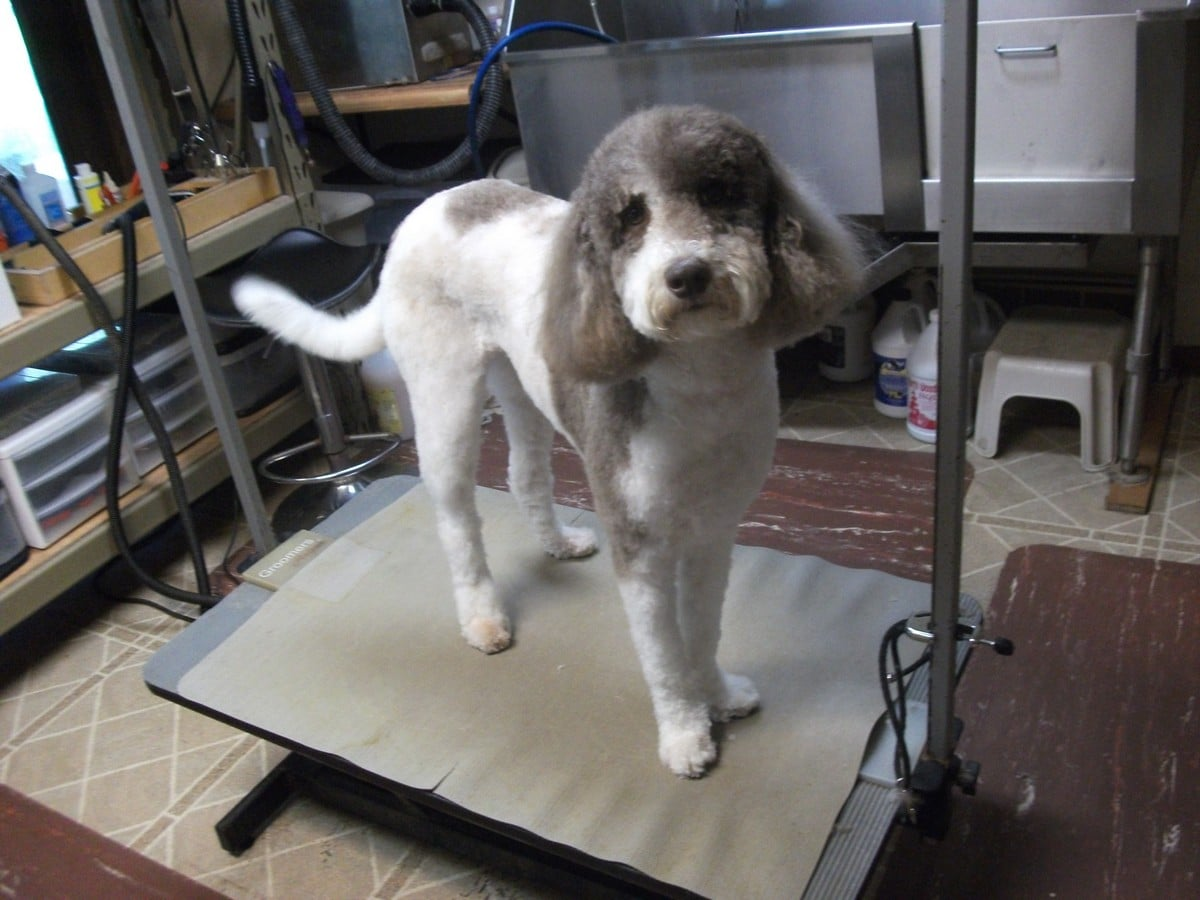 doublej-dog-grooming-022