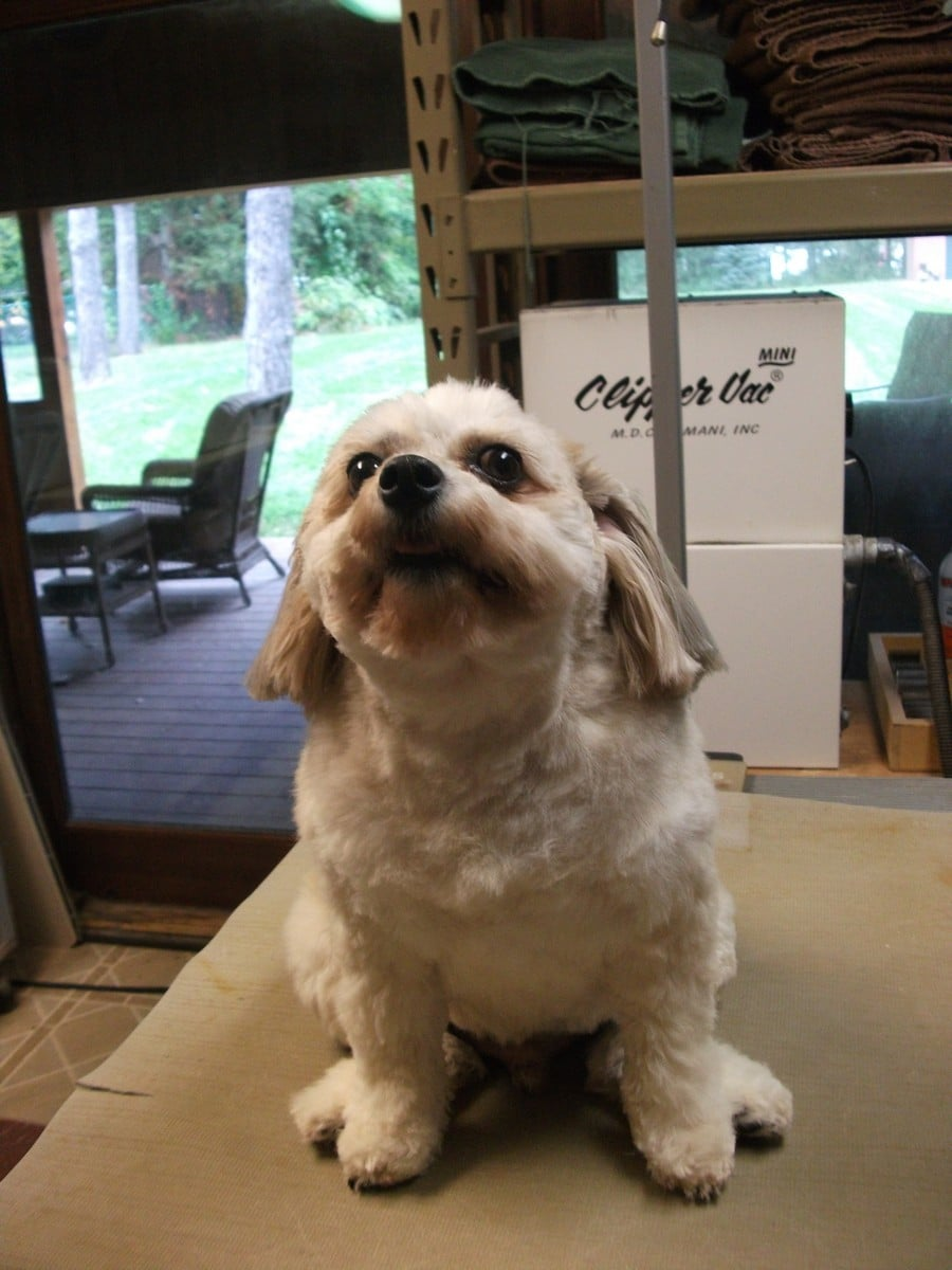 doublej-dog-grooming-026