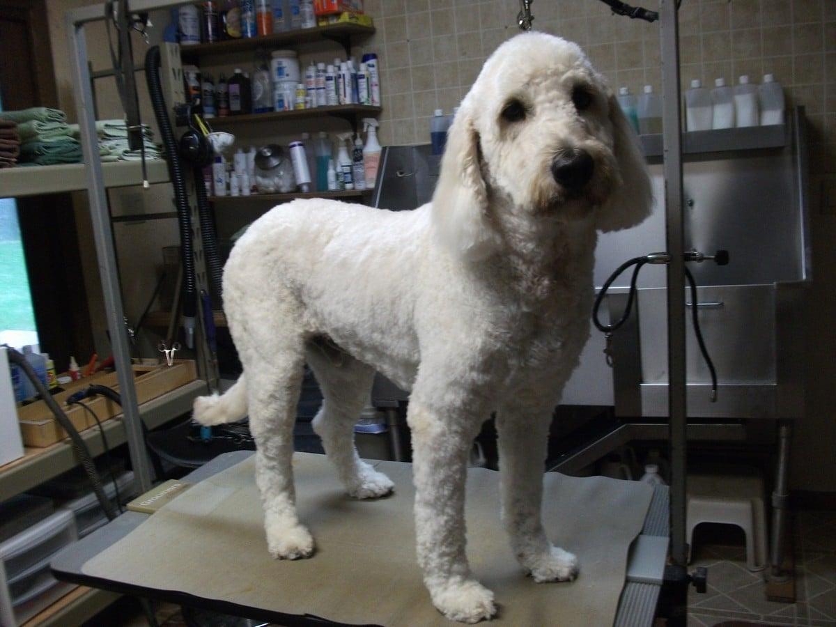 doublej-dog-grooming-027