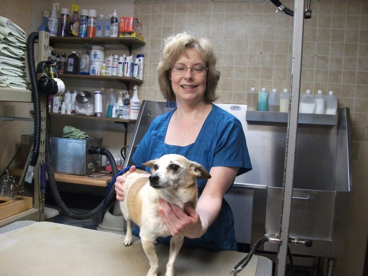 doublej-dog-grooming-029