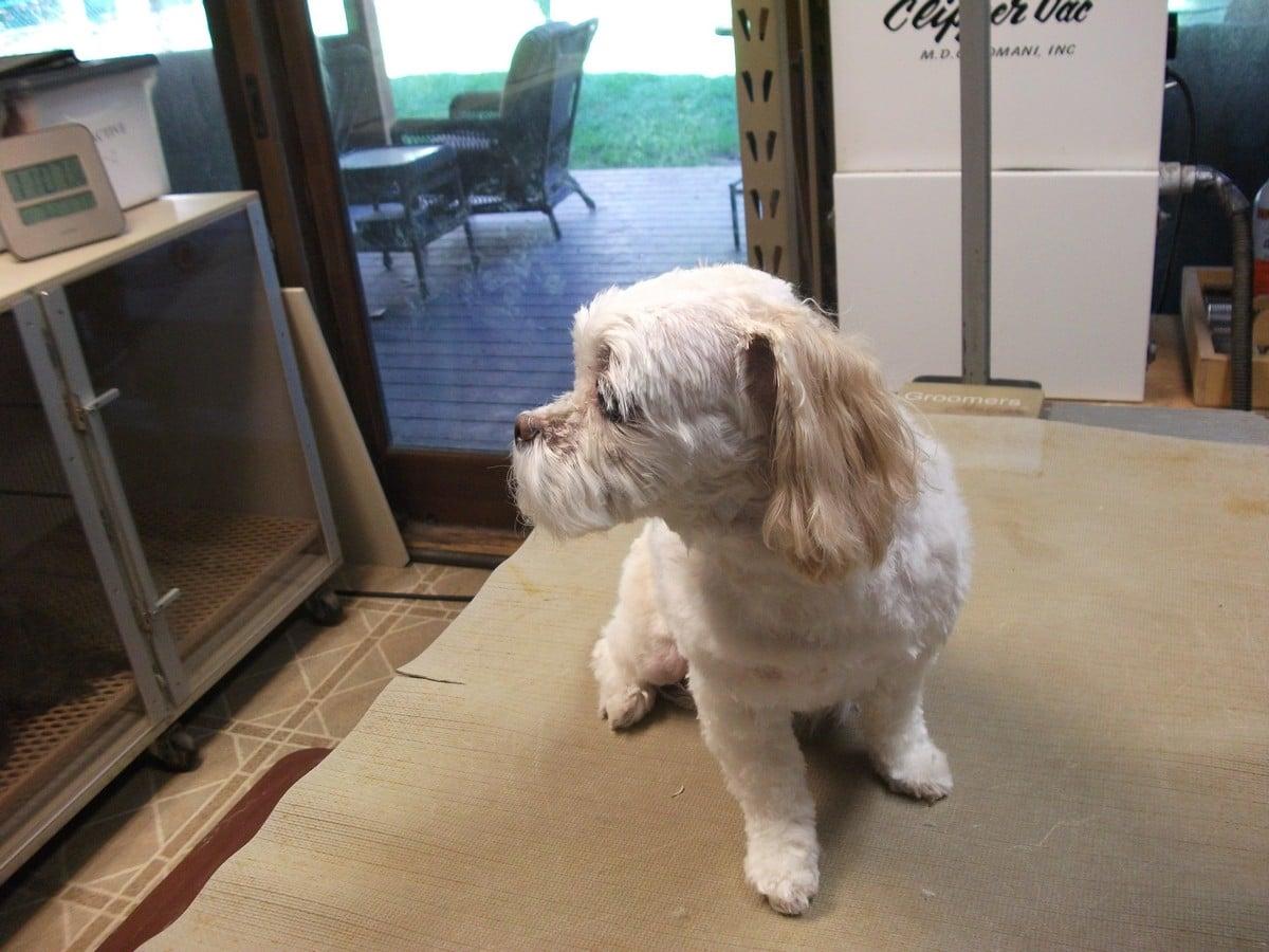 doublej-dog-grooming-031