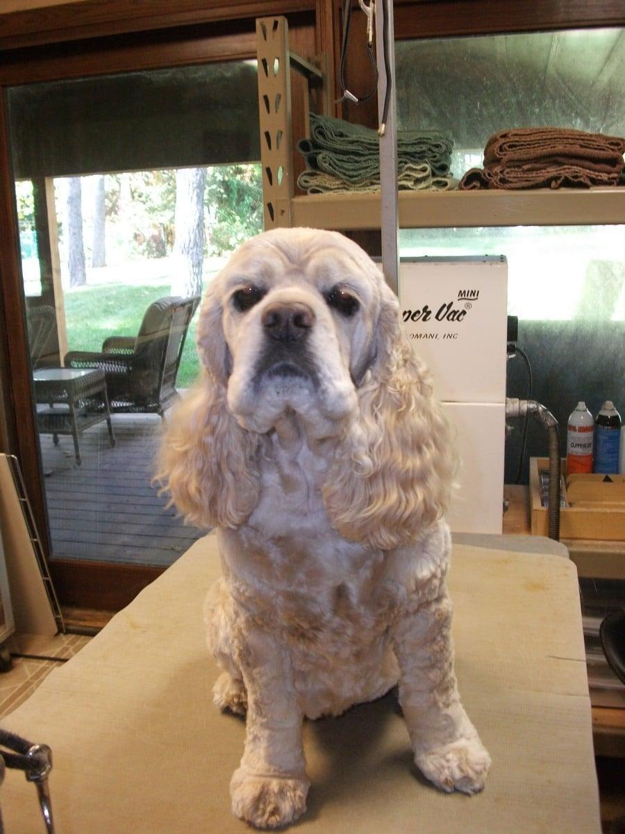 doublej-dog-grooming-032