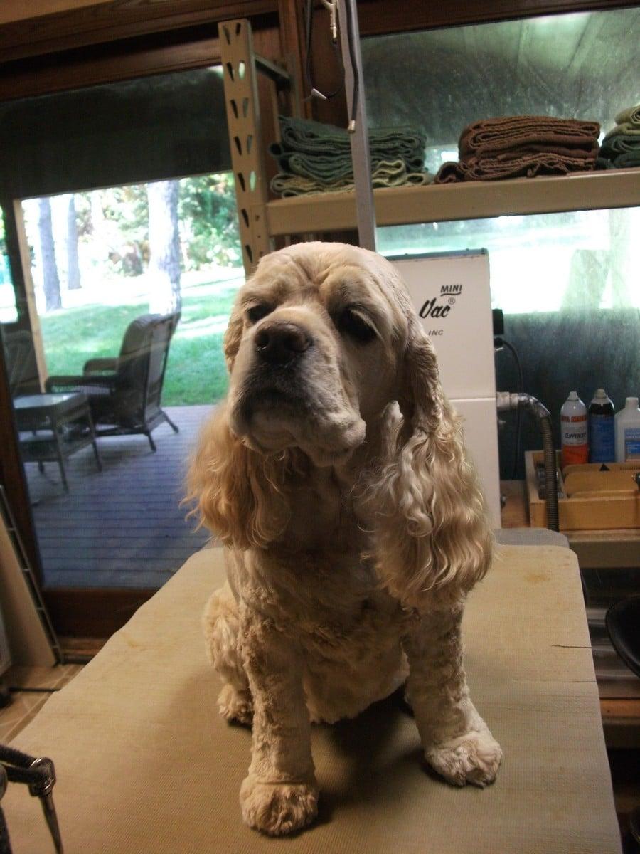 doublej-dog-grooming-033