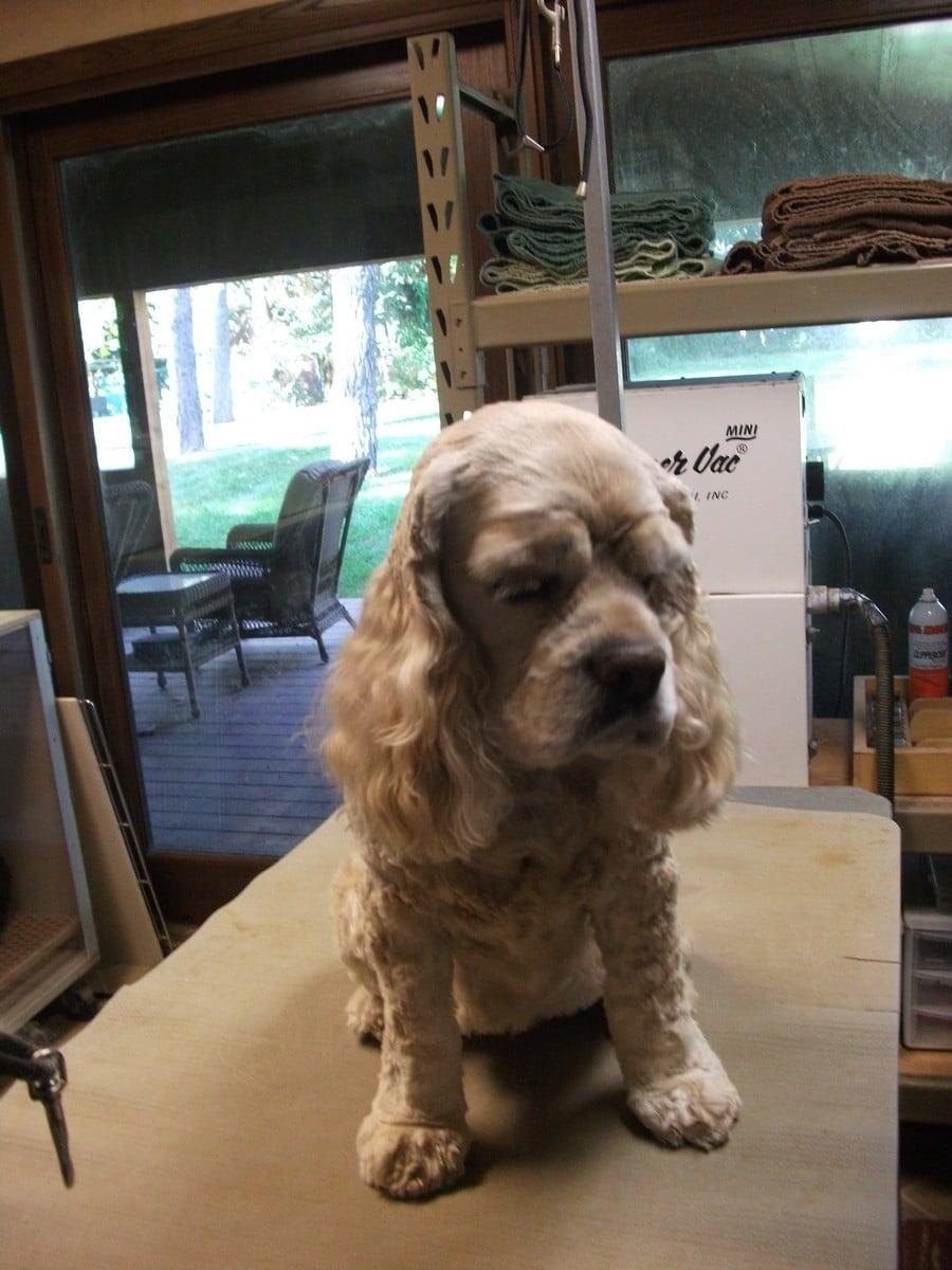 doublej-dog-grooming-034