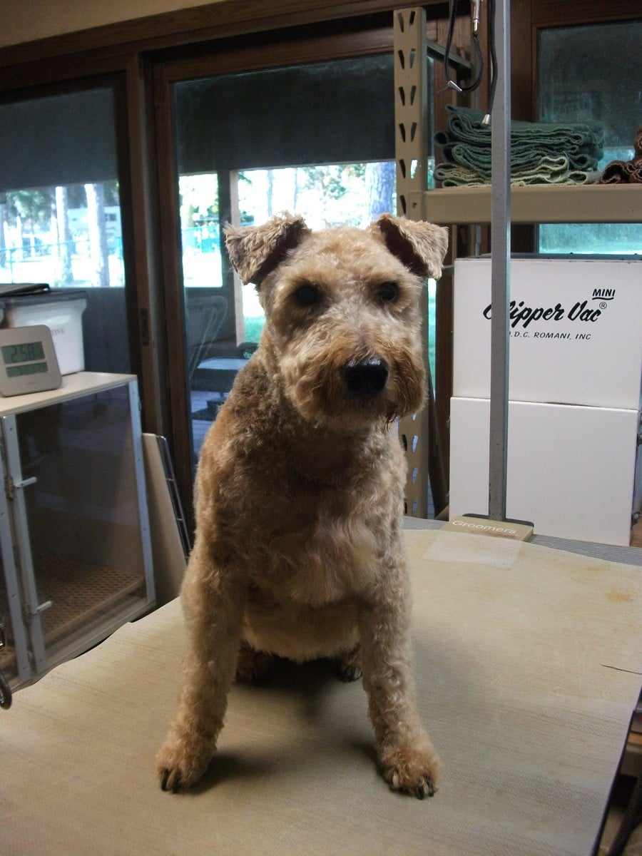 doublej-dog-grooming-035