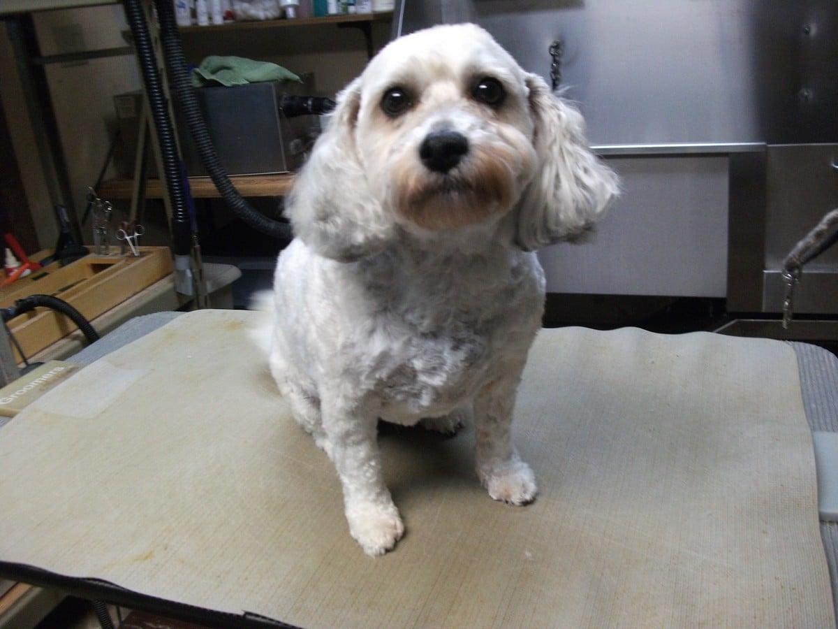 doublej-dog-grooming-036