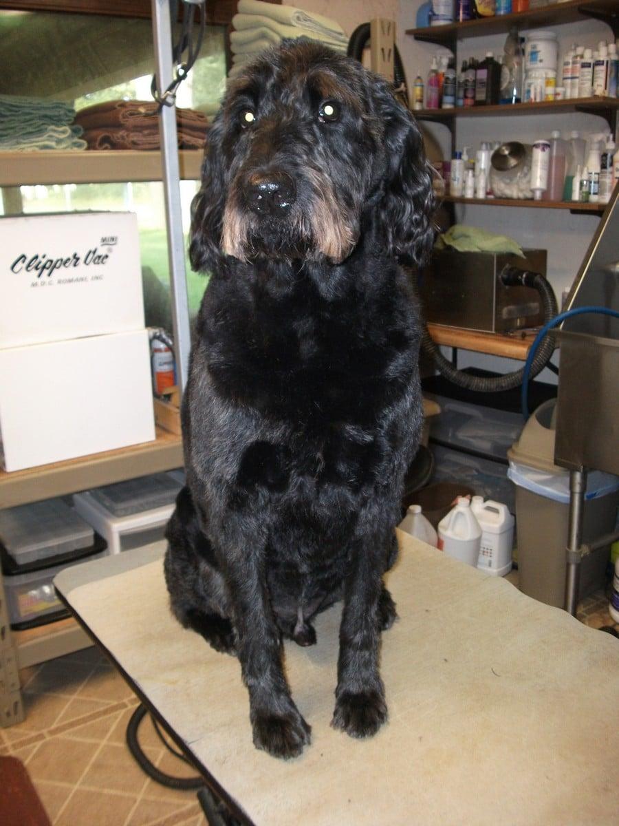 doublej-dog-grooming-038
