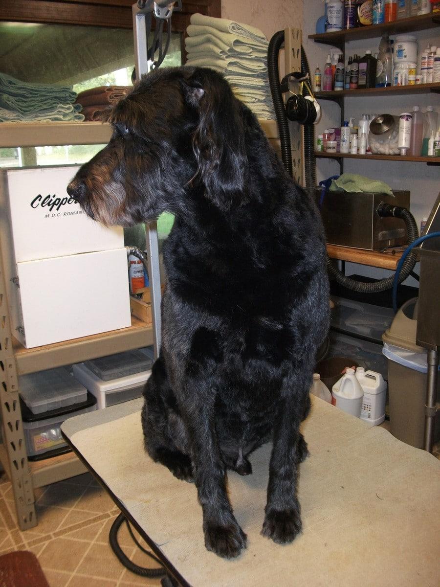 doublej-dog-grooming-039
