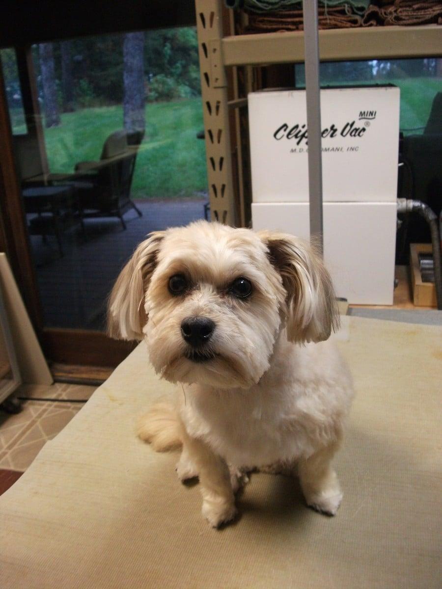 doublej-dog-grooming-042