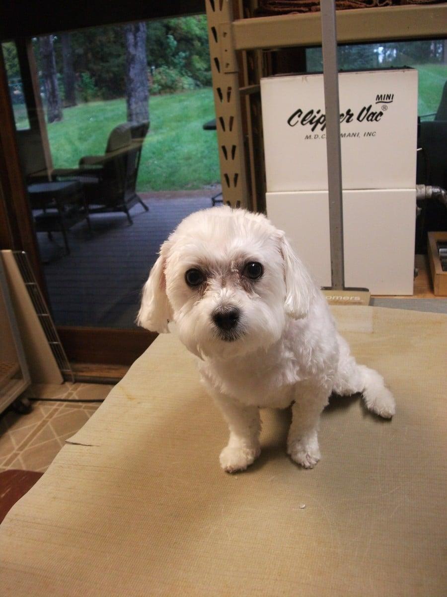 doublej-dog-grooming-043