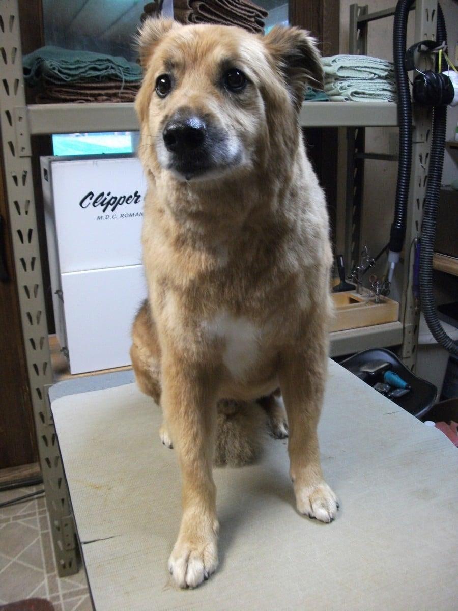 doublej-dog-grooming-044