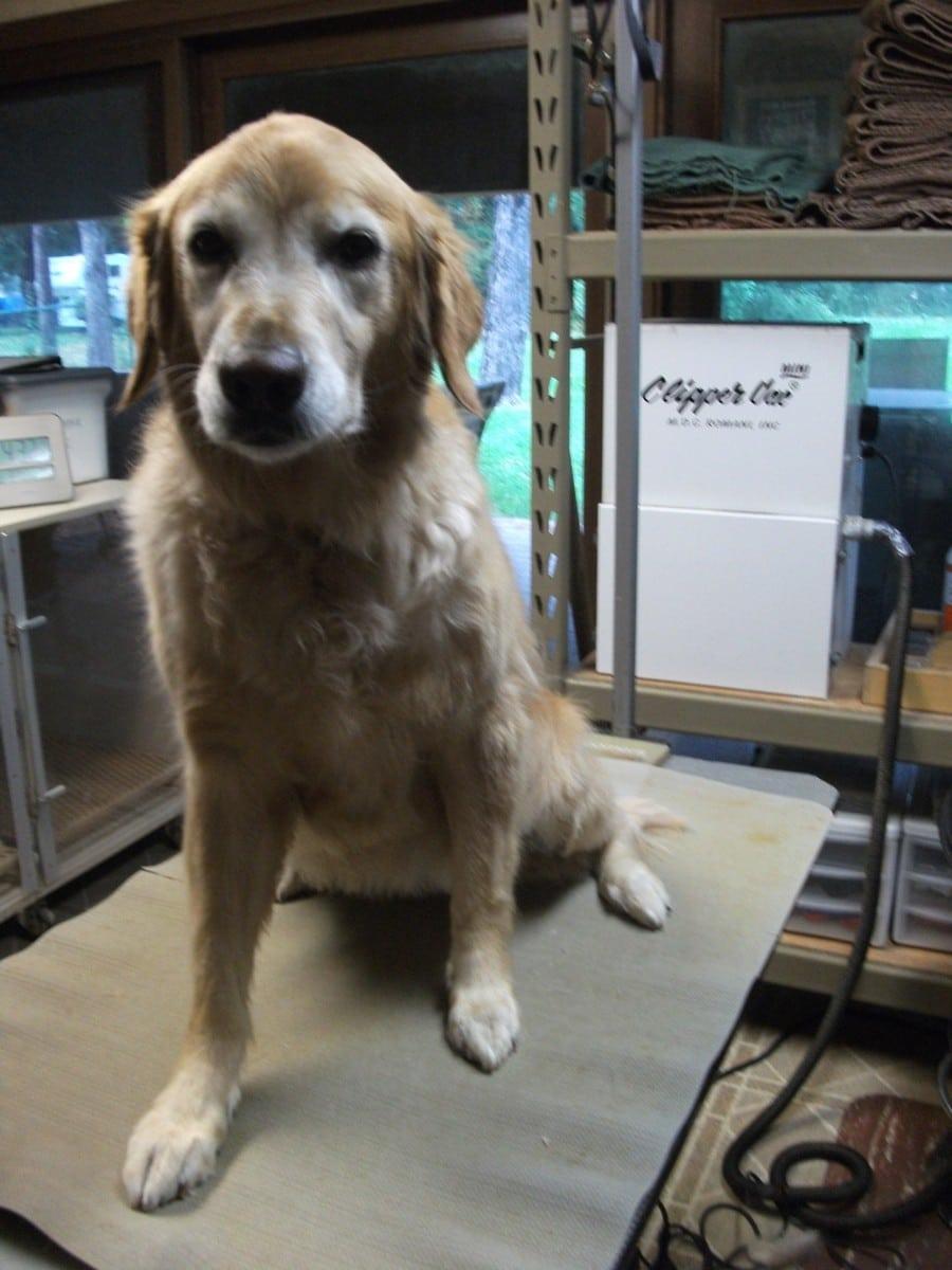 doublej-dog-grooming-045