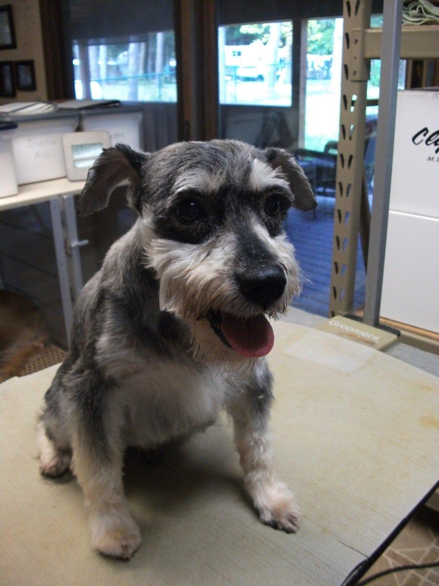 doublej-dog-grooming-051