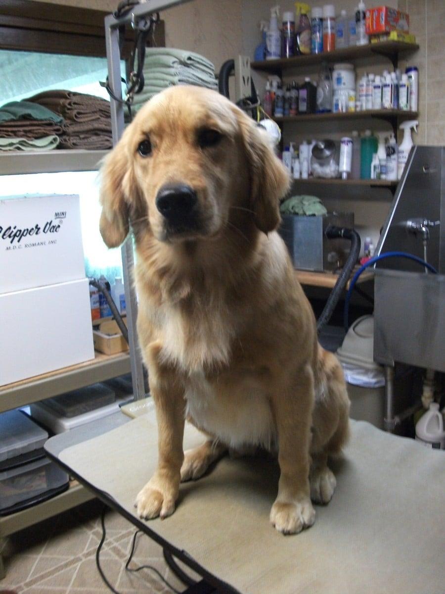 doublej-dog-grooming-052