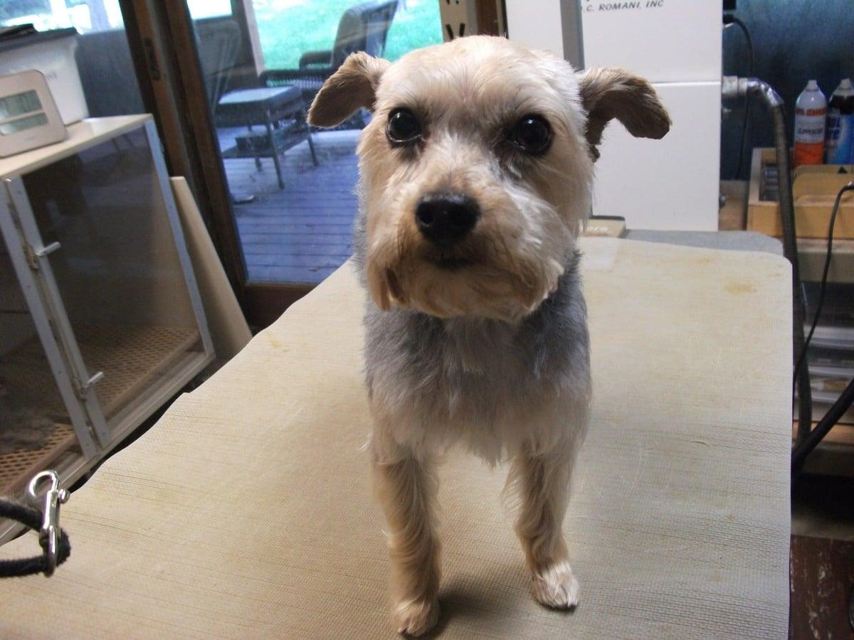 doublej-dog-grooming-053