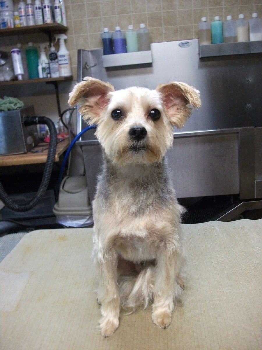 doublej-dog-grooming-055
