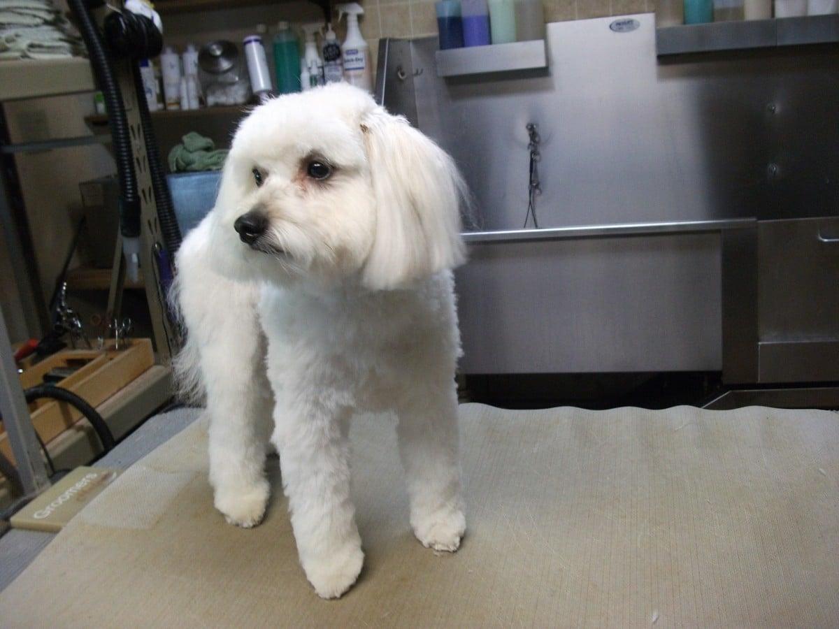 doublej-dog-grooming-056