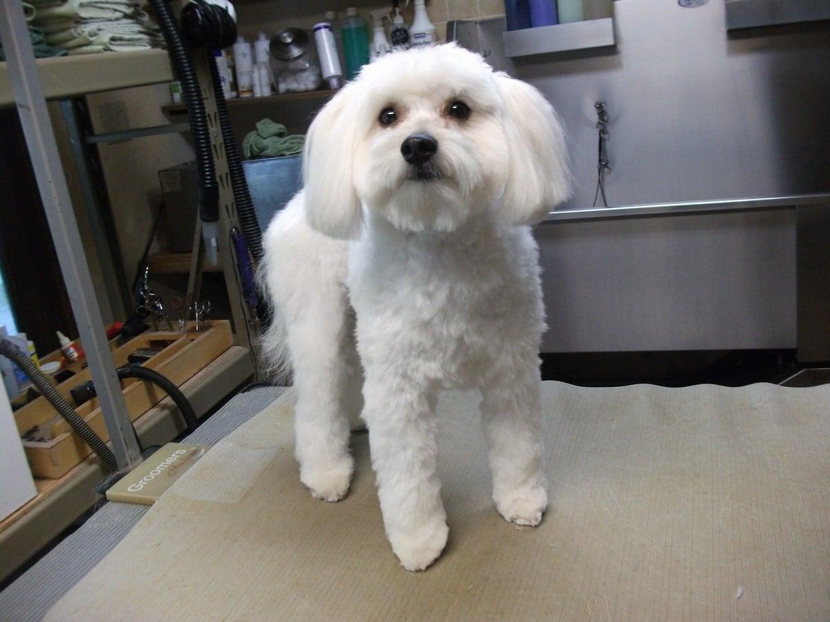 doublej-dog-grooming-057