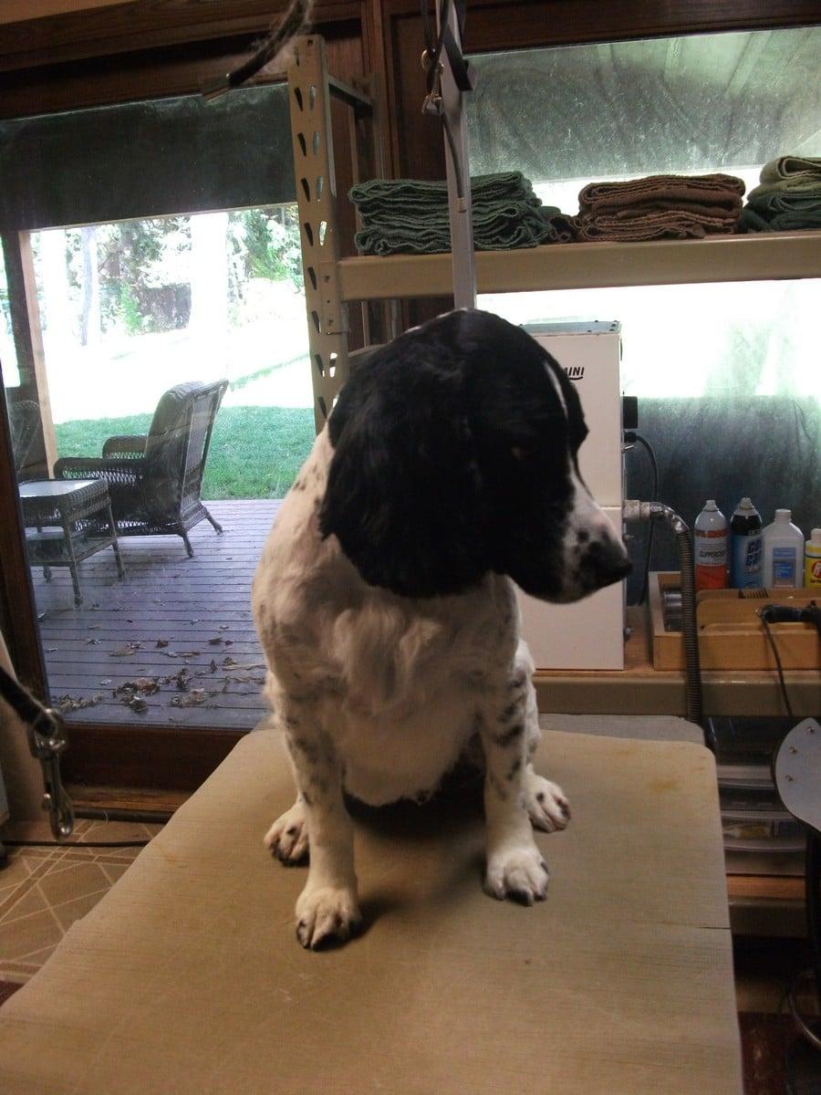 doublej-dog-grooming-058
