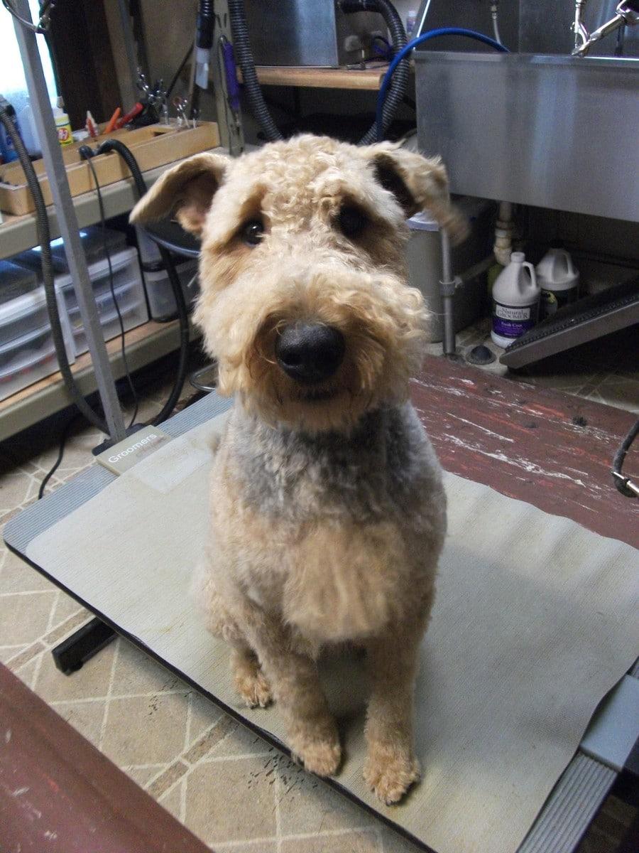 doublej-dog-grooming-064