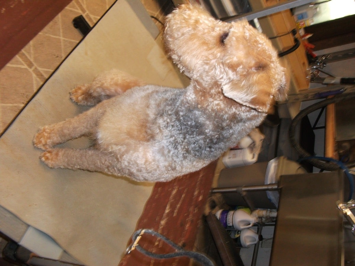 doublej-dog-grooming-065