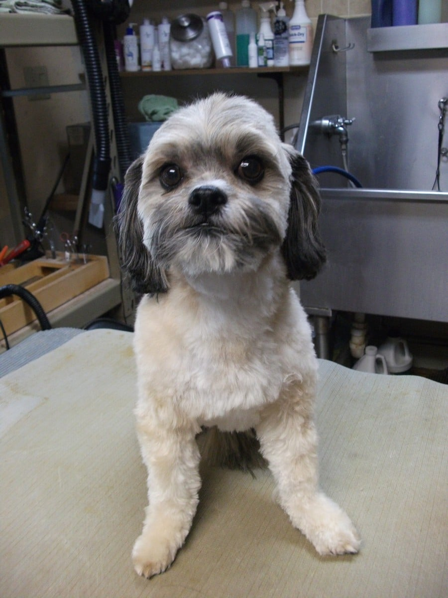 doublej-dog-grooming-067