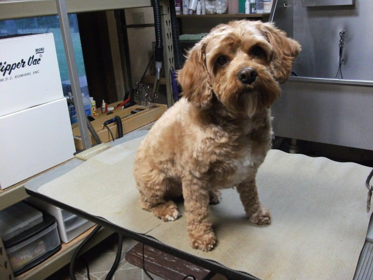 doublej-dog-grooming-069