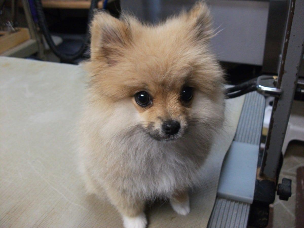 doublej-dog-grooming-075