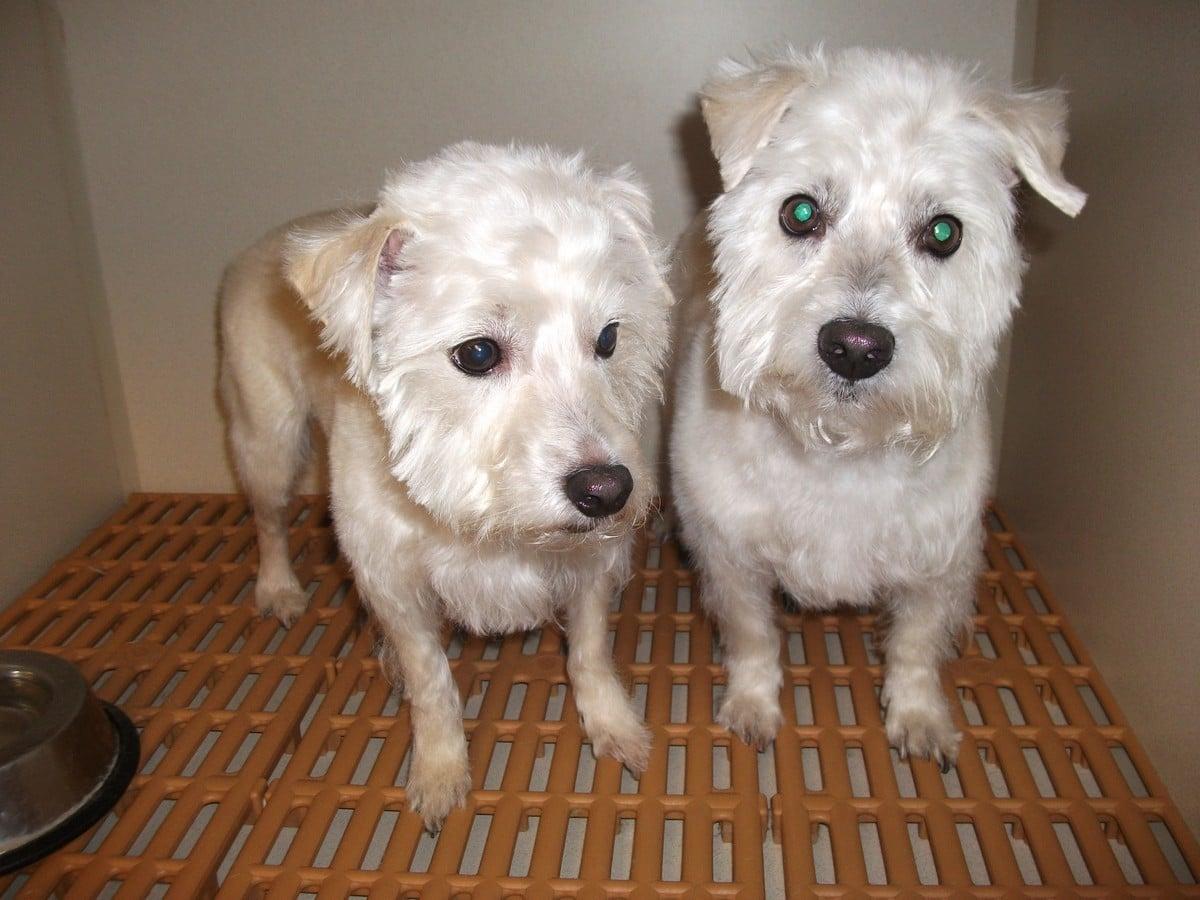 doublej-dog-grooming-077