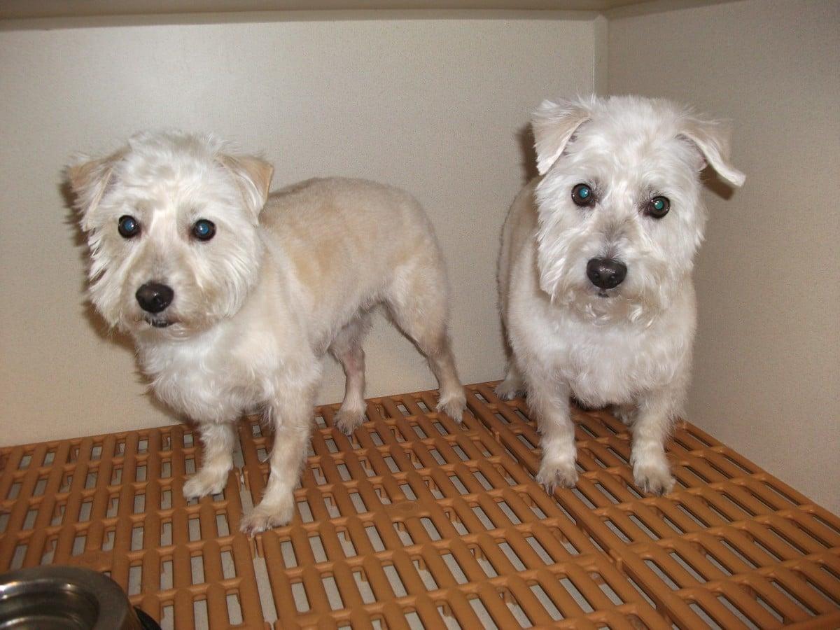 doublej-dog-grooming-078