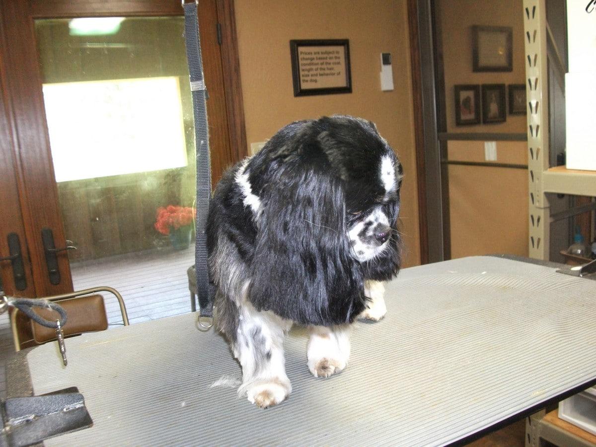 doublej-dog-grooming-079