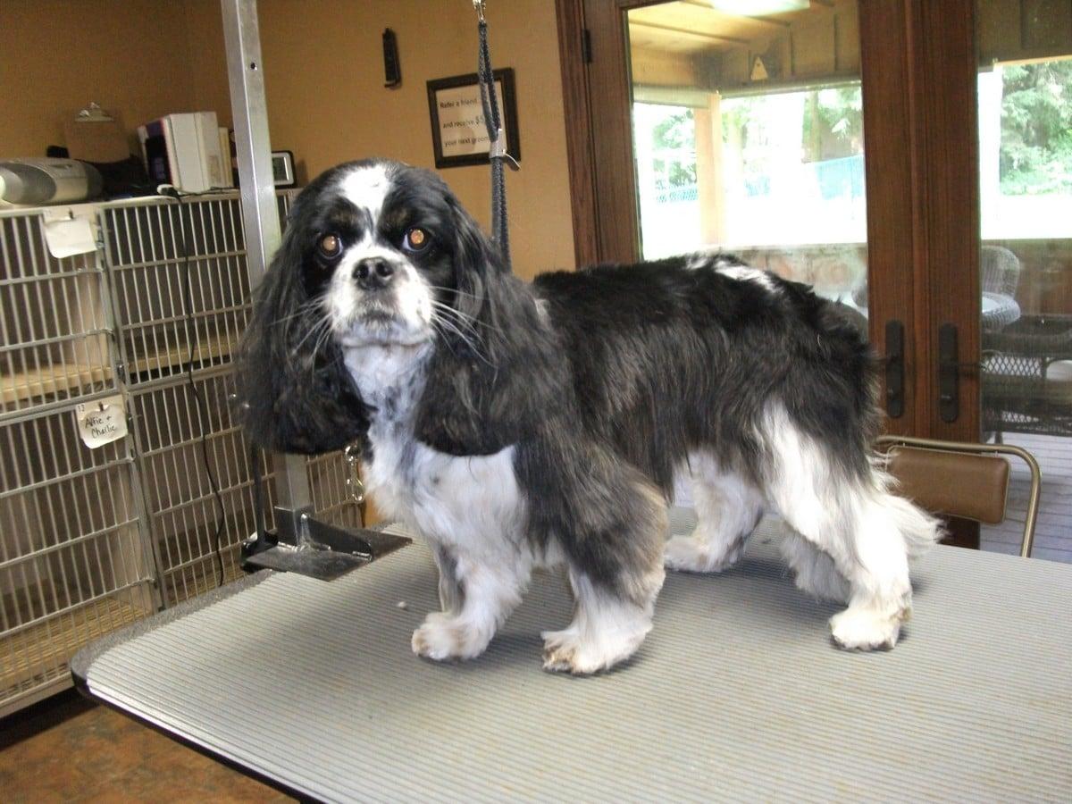 doublej-dog-grooming-080