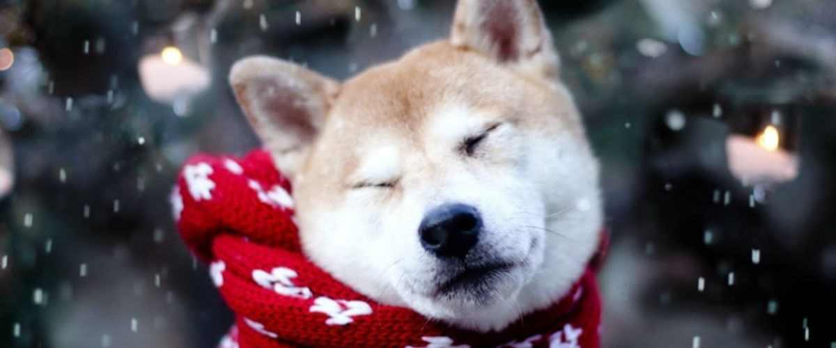 PROTECTING YOUR PET DURING THE WINTER MONTHS