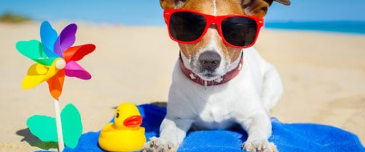 SUMMERTIME HAZARDS TO YOUR PET
