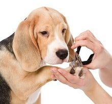 dog-grooming-clipping-service