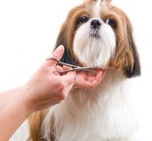 dog-grooming-trimming-service