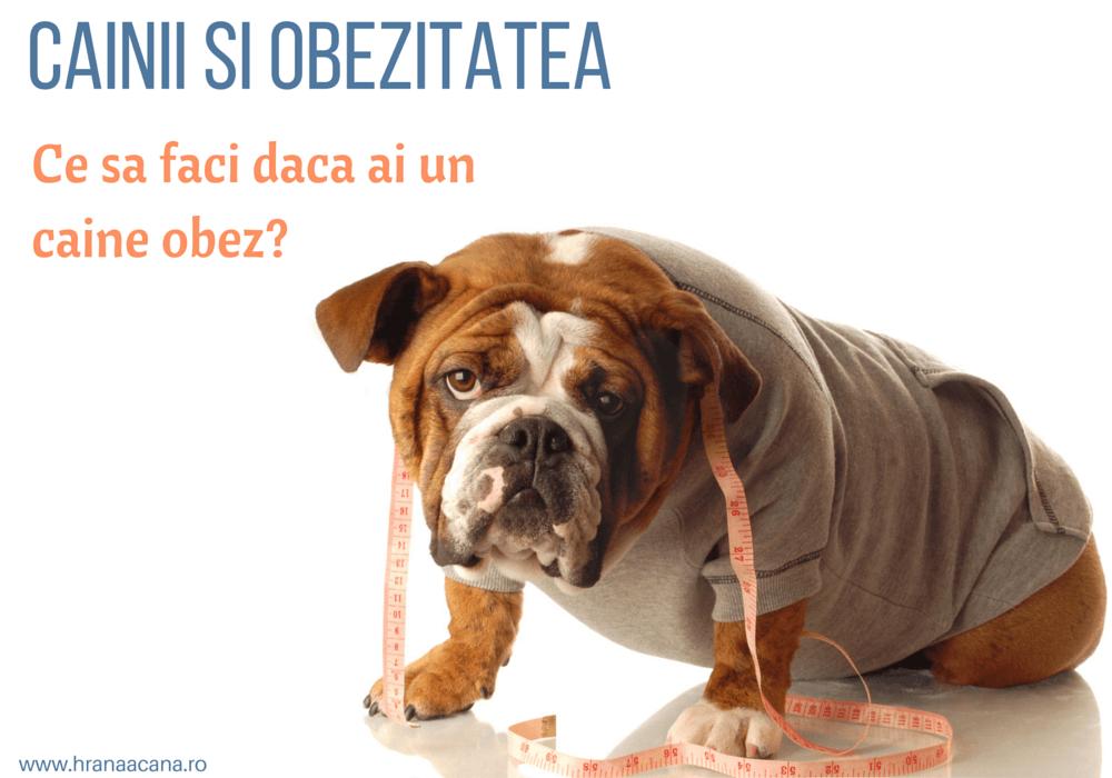 Ulei de pește pentru câini: beneficii, indicații, doze