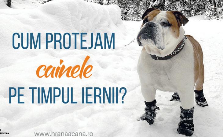 Cum protejam cainele pe timpul iernii?